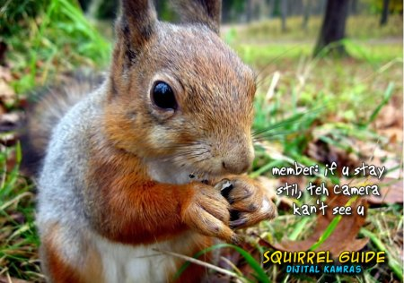 squirrel guide - dijital cameras